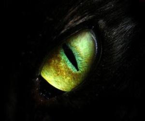 eye, dragon, and cat image