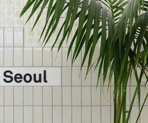 aesthetic, plants, and seoul image