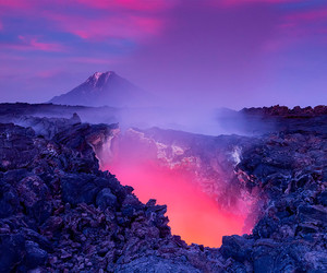 nature, purple, and pink image