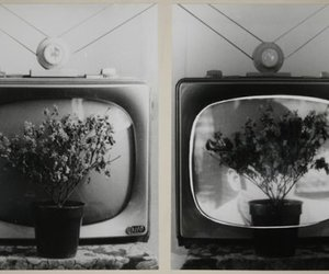 flowers, tv, and black and white image