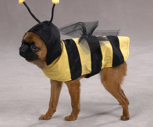 funny pictures, funny images, and bee funny dog costume image
