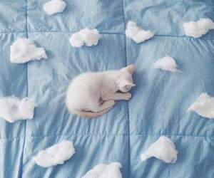 cat, blue, and clouds image