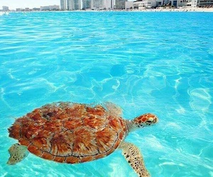 beach, turtle, and cancun image