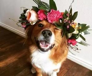 dog, animal, and flowers image