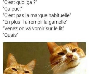 drole, mdr, and humour image
