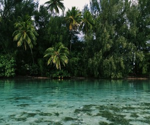 tropical, summer, and travel image