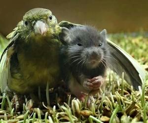 animals, cuteness, and birds image