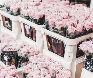 pink, roses, and fllowers image