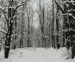 forest, snow, and snowflake image