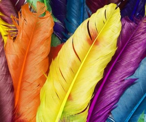 feather, colors, and colorful image