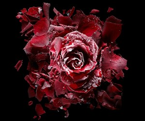 beauty, blood, and Darkness image