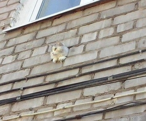 cat, funny, and wall image