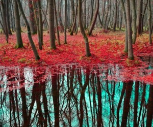 trees, water, and forest image