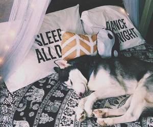 bed, bedroom, and husky image