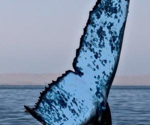 peaceful, whale, and sea image