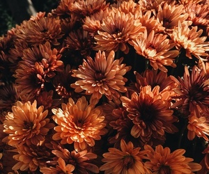 flowers, orange, and fall image