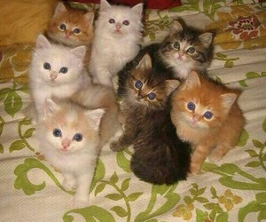 cats. image