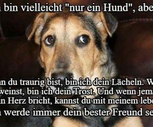 deutsch, hunde, and sprüche image