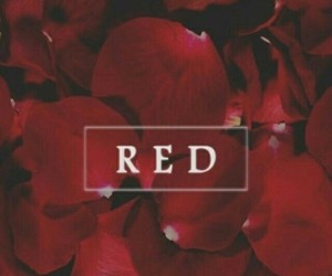 red, wallpaper, and rose image