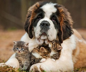 dog, kitten, and animal image