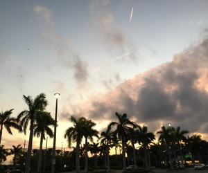 Miami, palms, and sunset image