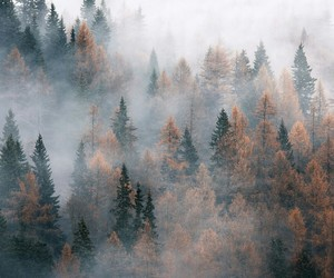 fall, forest, and november image