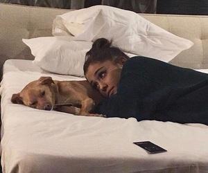 ariana grande, ariana, and dog image