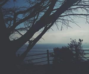 dark, tree, and grunge image