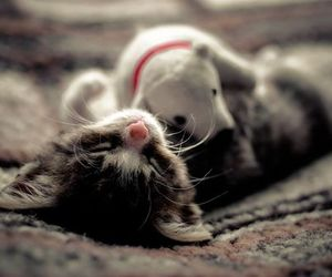 animals, cats, and kittens image