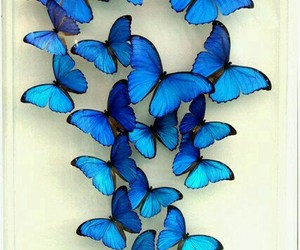 blue, butterfly, and wallpaper image