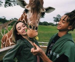 giraffe, animal, and couple image