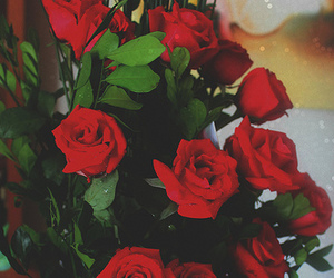 floral, red, and red roses image
