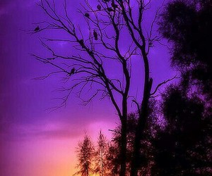 purple, sunset, and nature image