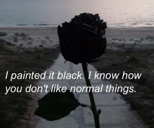 black, rose, and ahs image