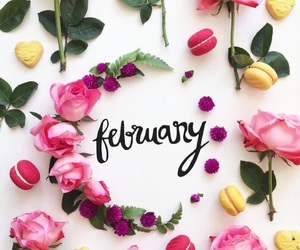 february, flowers, and pink image