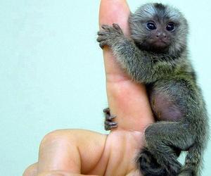 monkey, animal, and fingers image