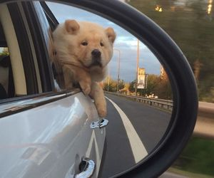 car, wind, and dog image