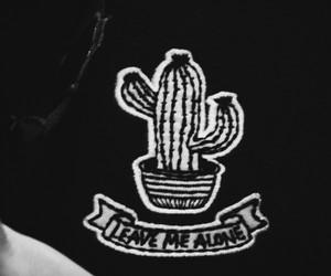 kaktuz image