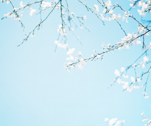 blue, cherry blossoms, and flowers image