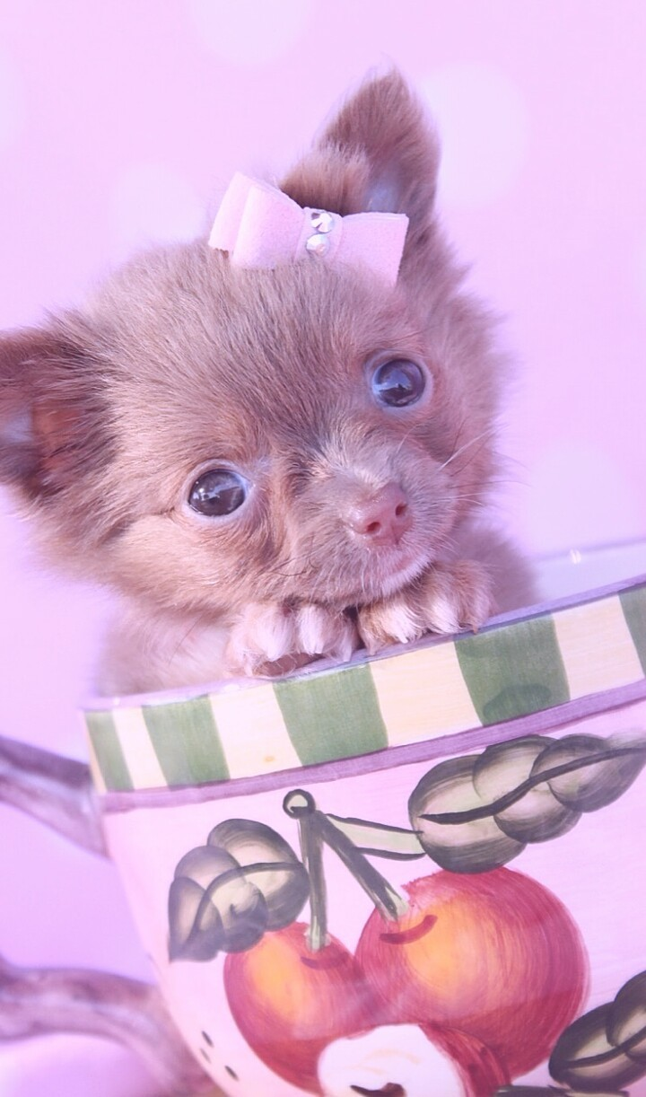 Animals Baby Baby Dog Background Beautiful Beautiful Dog Beauty Blue Background Cute Animals Cute Baby Cute Puppy Dog Iphone Nature Puppy Still Life Wallpapers We Heart It Wallpaper Iphone Purple Background Pastel