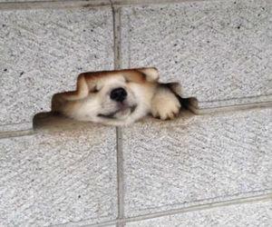 dog, japan, and 秋田犬 image