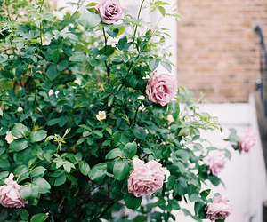 flowers, rose, and blossom image