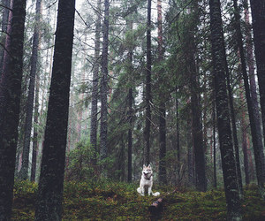 dog and forest image