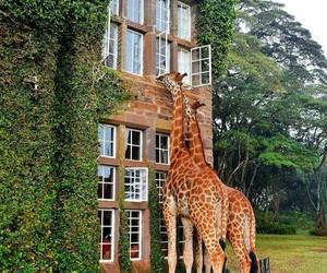 giraffe, animal, and house image