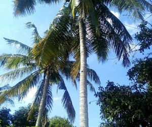 Malaysia, village, and coconuttree image
