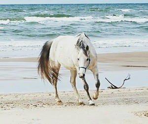arabian, beach, and horse image