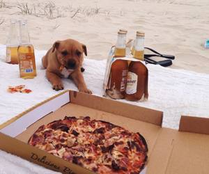 dog, beach, and food image