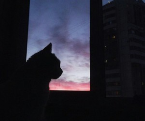 cat, window, and pink image