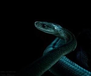 snake, slytherin, and harry potter image