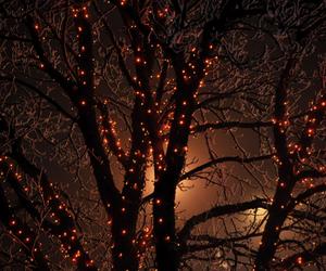 light, tree, and autumn image